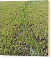 Purple Glasswort (salicornia Ramosissima) Wood Print