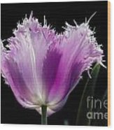 Purple Glow Wood Print