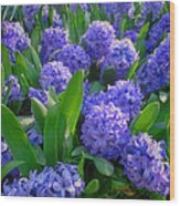 Purple Hyacinths Wood Print