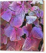 Purple Hydrangea Wood Print