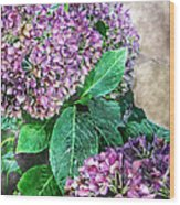 Purple Hydrangeas Wood Print