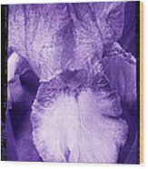 Purple Iris Wood Print