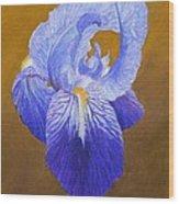 Purple Iris Wood Print