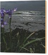 Purple Irises On Beach Wood Print