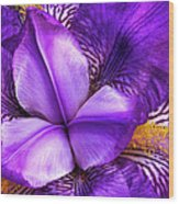 Purple Japanese Iris Wood Print