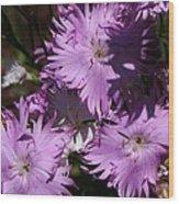 Purple Lace Wood Print