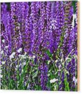 Purple Lavender Flower In Bloom  Wood Print