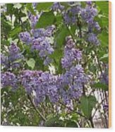 Purple Lilacs Wood Print