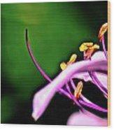Purple Lily Wood Print