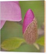 Purple Magnolia Wood Print