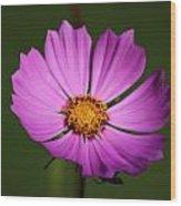 Purple Nurple Wood Print