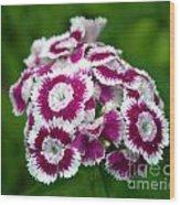 Purple On White Flowers Wood Print
