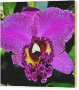 Purple Orchid 006 Wood Print