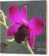 Purple Orchid Aglow Wood Print