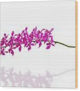 Purple Orchid Bunch Isolated Wood Print