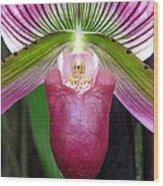 Purple Orchid Close Up Wood Print