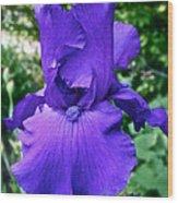 Purple Overload Wood Print