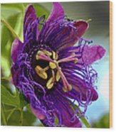 Purple Passion Wood Print by Michelle Harrington