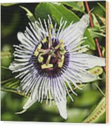 Purple Passionflower Wood Print by April Wietrecki Green