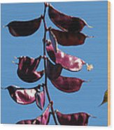 Purple Pods Wood Print