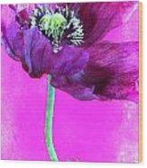Purple Poppy On Pink Wood Print