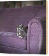 Purple Resplendent Wood Print