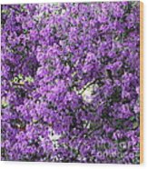 Purple Screen Square Wood Print