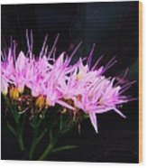 Purple Sedum Wood Print