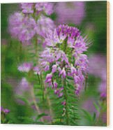 Purple Serenade Wood Print