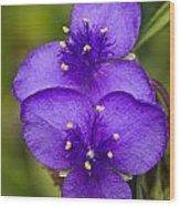 Purple Spiderwort 1 Wood Print