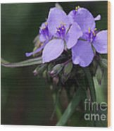 Purple Spiderwort Flowers Wood Print