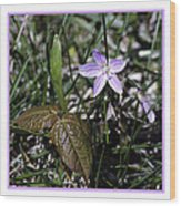 Purple Spring Trail Flower Wood Print