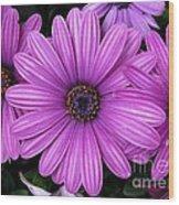 Purple Trio Wood Print