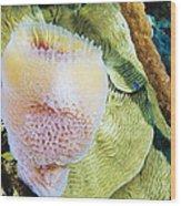 Purple Vase Sponge Wood Print