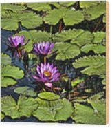 Purple Water Lilies - Nymphaea Capensis  Wood Print