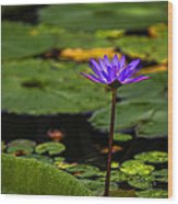 Purple Waterlily Wood Print