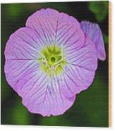Purple Wildflower Wood Print