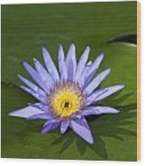 Purple Yellow Lotus Flower Wood Print