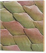 Python Skin, Sem Wood Print