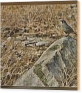Quail On Rock Wood Print