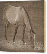 Quarter Horse In Sepia Wood Print by Betty LaRue