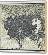 Queen Ann Lace Illustrated Wood Print