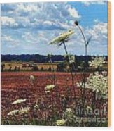 Queen Annes Lace And Hay Bales Wood Print