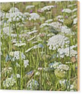 Queen Anne's Lace In All Its Glory Wood Print