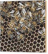 Queen Bee With Worker Bees Wood Print