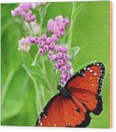 Queen Butterfly And Pink Flowers Wood Print