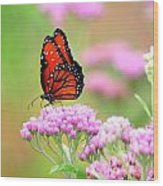 Queen Butterfly Sitting On Pink Flowers Wood Print
