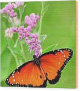 Queen Butterfly Wings With Pink Flowers Wood Print