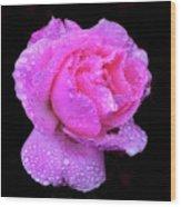 Queen Elizabeth Rose After Heavy Rainfall Wood Print