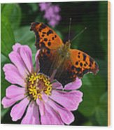 Question Mark Butterfly And Zinnia Flower Wood Print